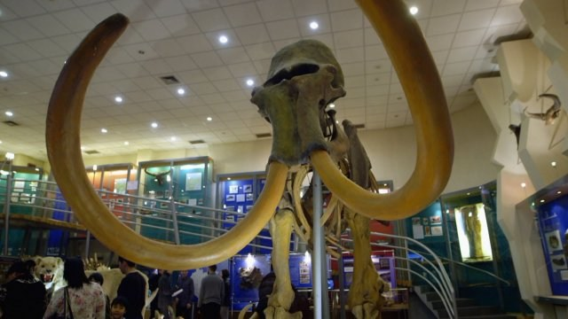 Cloning The Woolly Mammoth