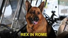 Rex In Rome