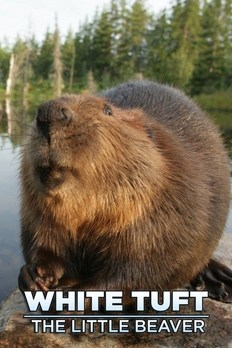 White Tuft The Little Beaver