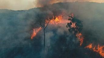 S1 E1: Amazon On Fire